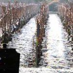 Laurent-Perrier-vineyard-sign-10004106.jpg
