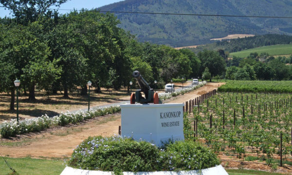 Kanonkop Pinotage 2015