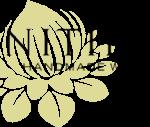 nitida-logo.png