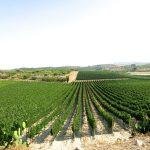 Sicily-Bagliodel-Cristo-di-Campobello-2015-July-3-2842.jpg