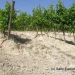 White soils at Cristo di Campobello.jpg
