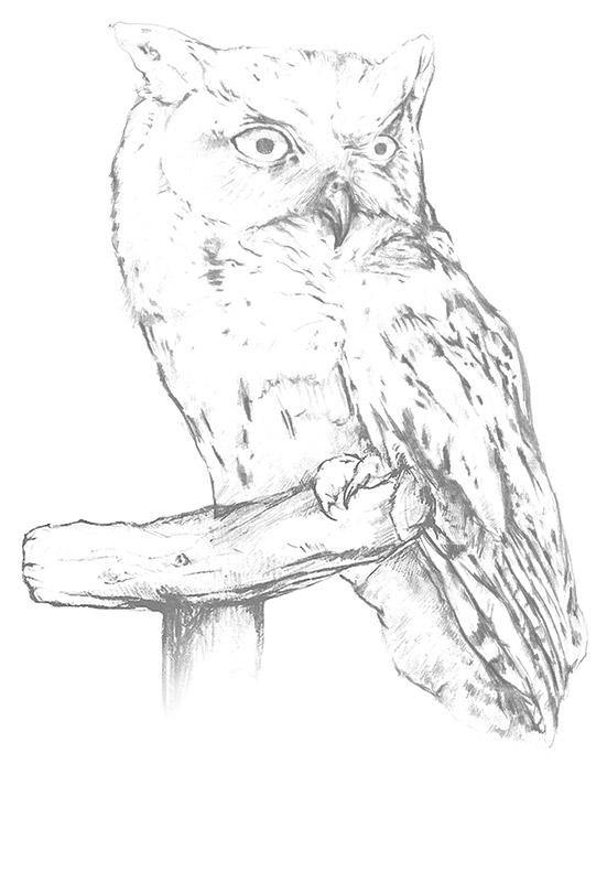 Neethlingshof Owl Post Pinotage 2013