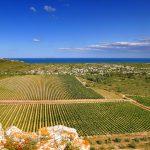 gerard bertrand chard vineyards.jpg
