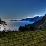 madeira vineyard & sea.jpg