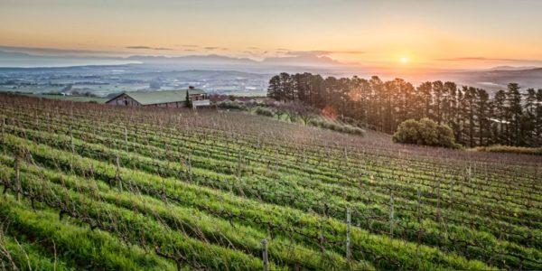 Uva Mira Vineyards